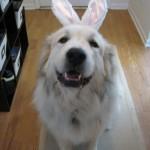 Easter 2011 001